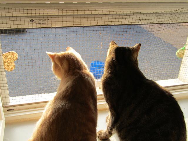 chat qui essaye de vomir Le spécialiste de tout ce qui concerne les chiens et les chats comment faire vomir mon chat elle a perdu sa voix et essaye de remettre mais n'y.