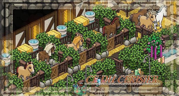-*Centre Équestre Du Cerisier-*
