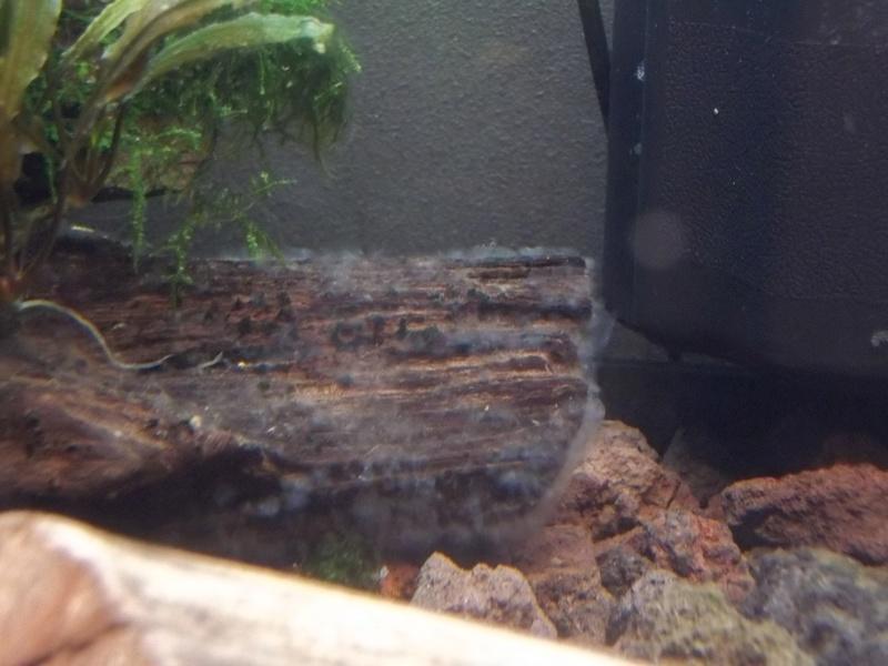 Mousse Blanche Sur Decor Aquarium