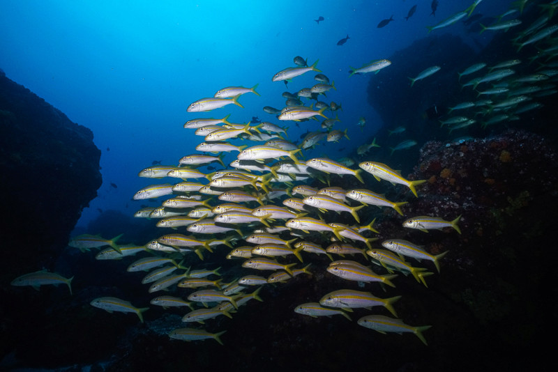 plongée galapagos forum