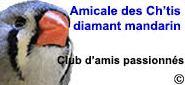 Club Amicale des Ch'tis Diamant Mandarin