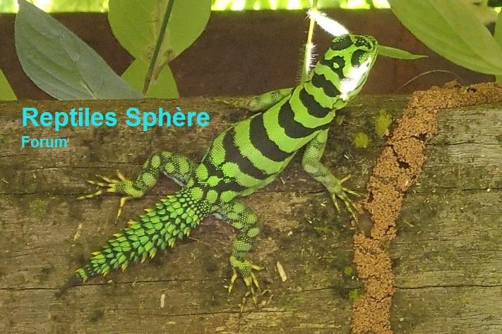 Forum Reptiles Sphère