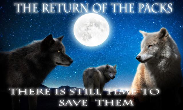 Return of the Packs