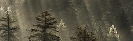 Forêt des Sauvages