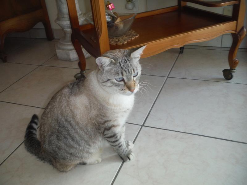 Quel est le plus beau chat - A quel age couper les griffes d un chat ...