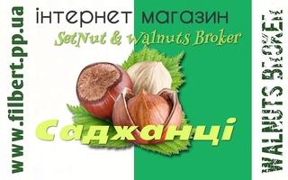 Купити саджанці Фундука Україна, 0957351986, SetNut