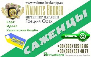 Купити саджанці волоського горіха в Україні 0957351986, Купити Ідеал, Walnuts Broker