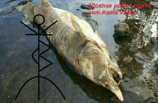 Дохлая рыба Автор Kama Vilard