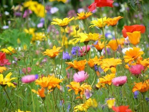 flores10.jpg
